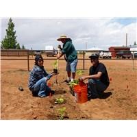 Pure Heart Community Garden - May 2013